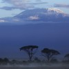 Zebras at the bottom of Mount Kilimanjaro, Kenya