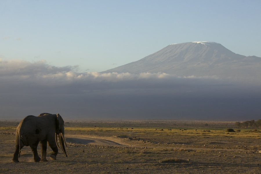 Elephant at the bottom of Mount Kilimanjaro