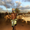 Gathering the bulls at the Kara bull jumping ceremony, Omo Valley, Ethiopia