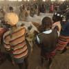Hamar and Kara warriors holding the bulls at the Kara bull jumping ceremony, Omo Valley, Ethiopia