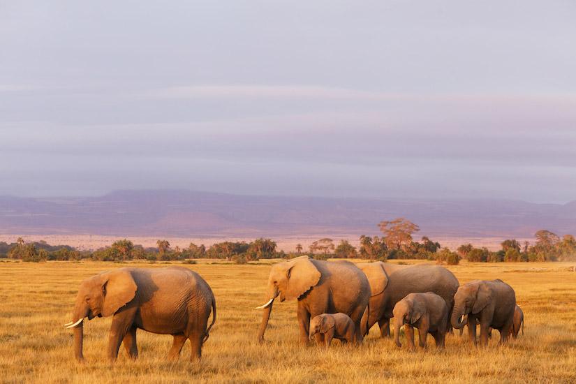 Elephant-2641