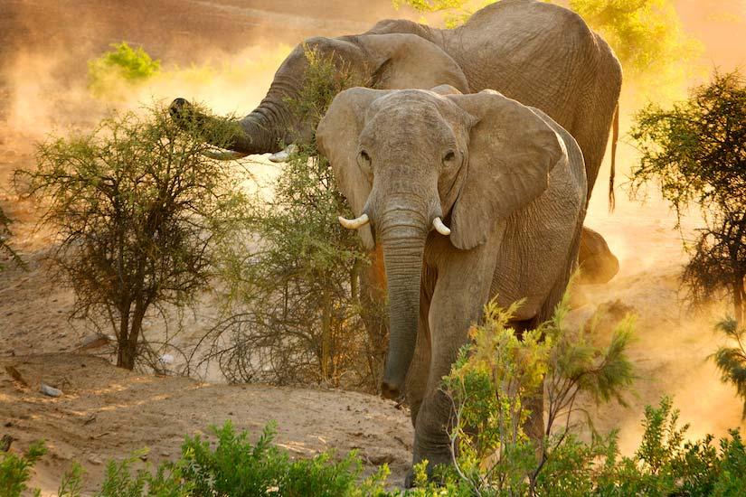Elephant-BV2U0055