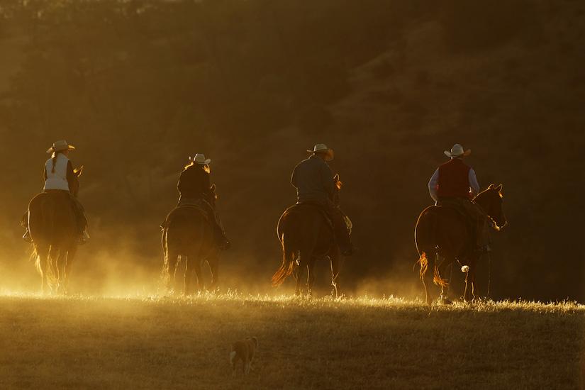 Horese-cowboys-908