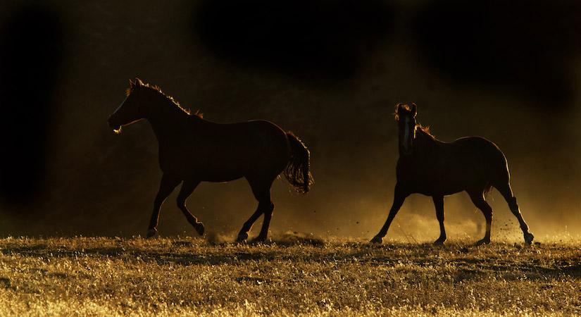 horses-0283