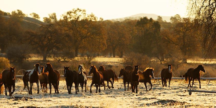 horses-1M858