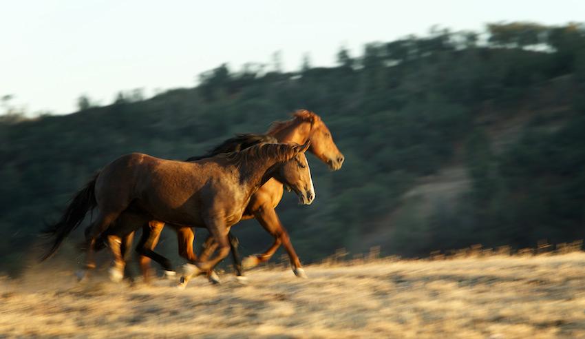 horses-3326