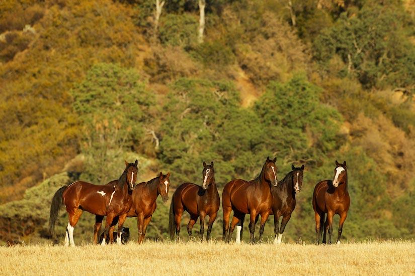 horses-3938