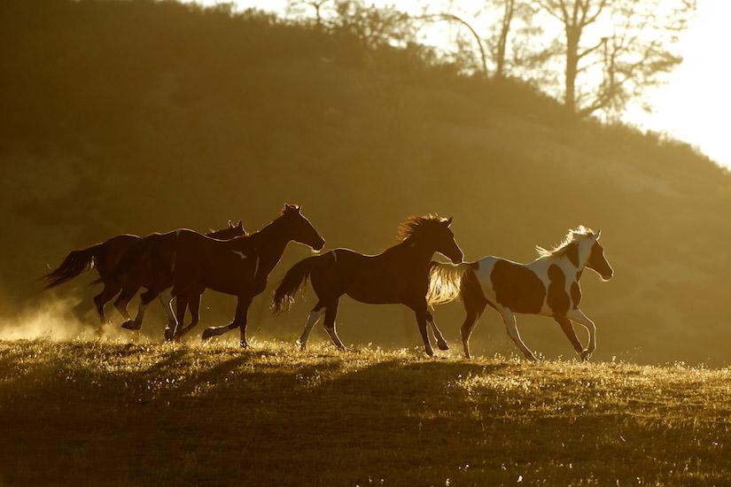 horses-4080
