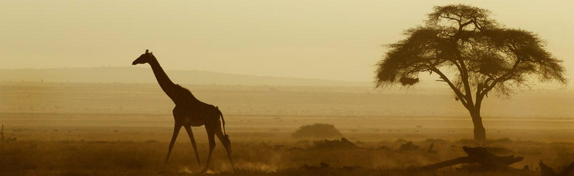 Africa-safari-kenya-featured-Image