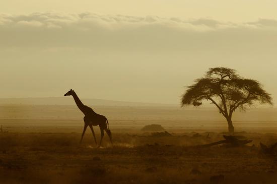 africa-safari-giraffe.jpg