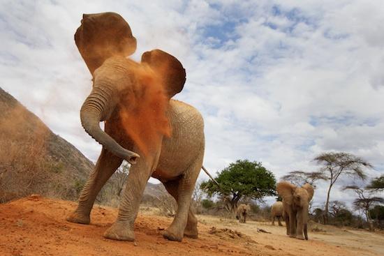Africa-Safari-Elephant-Piper-Mackay-StesAugN2032 (1)