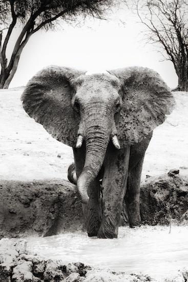Africa-Safari-Elephant-Piper-Mackay-StesAugN2265