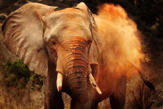 Africa-Safari-Elephant-Piper-Mackay-StesAugN2490