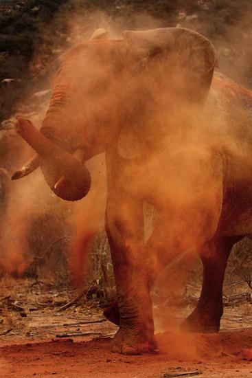 Africa-Safari-Elephant-Piper-Mackay-StesAugN2564 (1)
