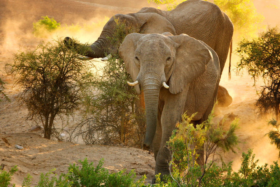 Elephant-Namibia-Photo-Tour-BV2U0055