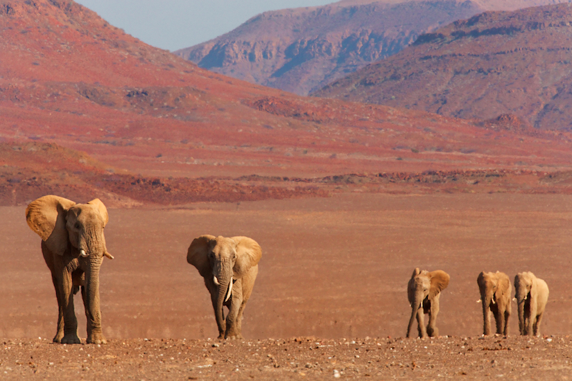 Elephant-Namibia-Photo-Tour-BV2U0433