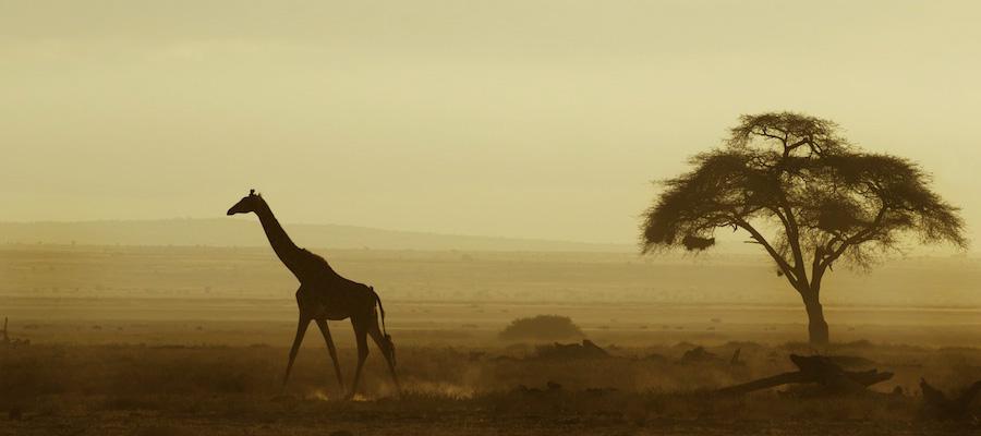 Giraffe-safari-africa-AmbAugN292