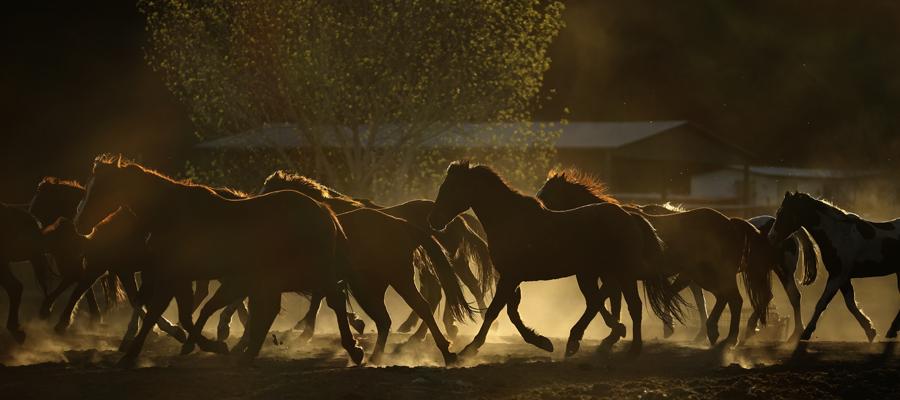 horses running in beautiful light