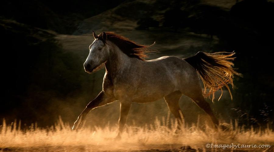 Running Free © Laurie RubinA