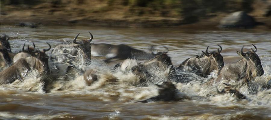 Migration-Safari-Africa-Kenya-MARA8L0695