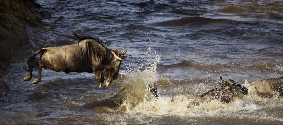 migration-Africa-safari-Kenya-BV2U7064