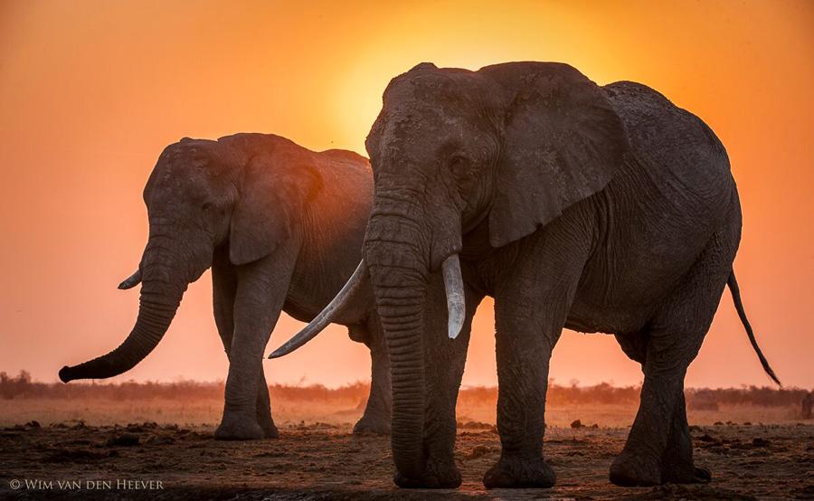 ElephantsInSavute