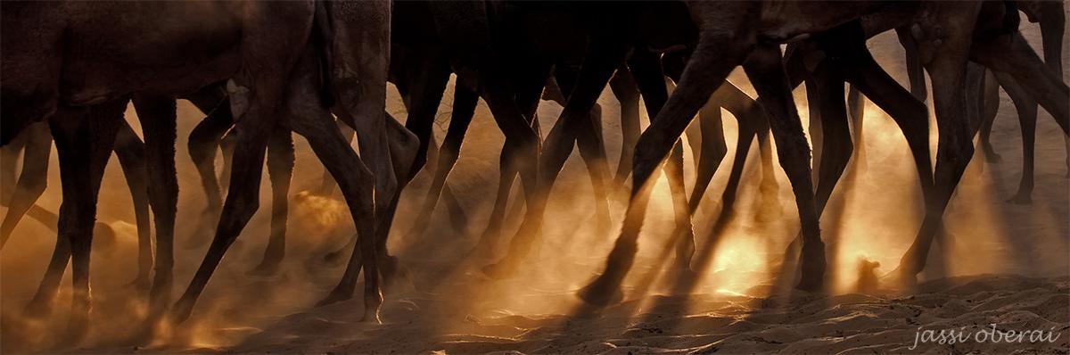 Rajasthan India Photo Tour