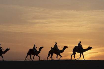 Incredible India photo tour camels in the desert