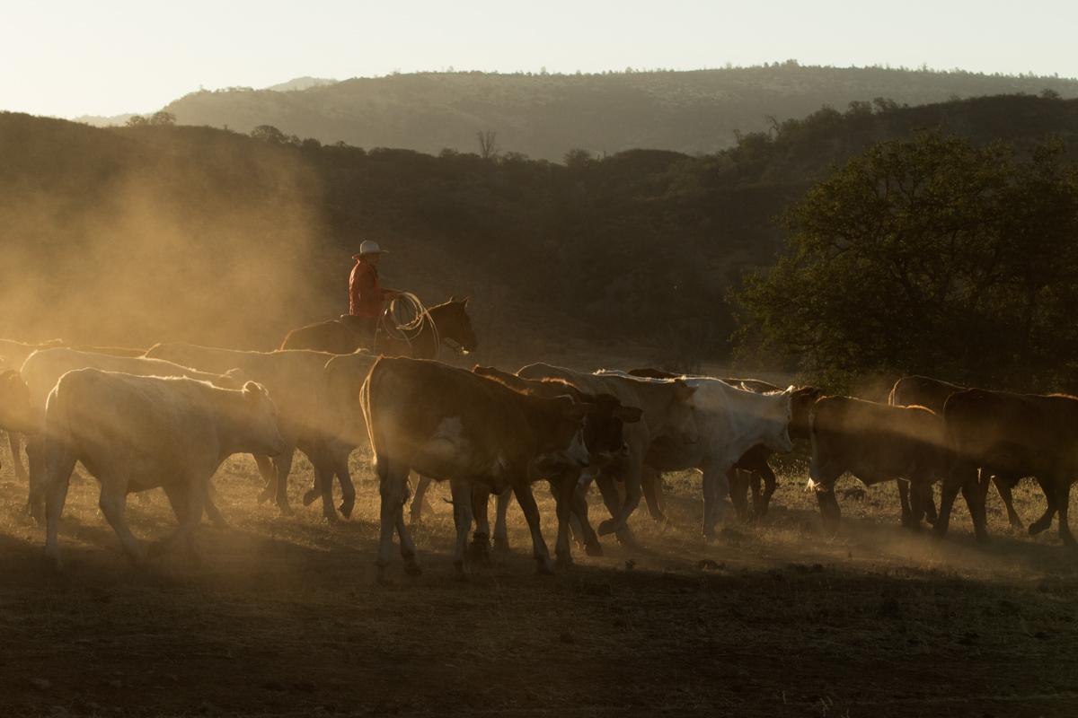 horse photography workshop