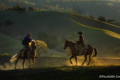 Horses-858C