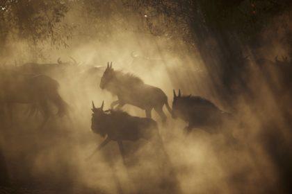 Great migration safari