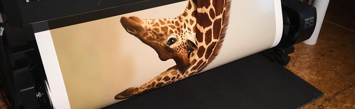 Winning image of Natures best Africa